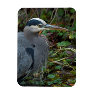 Great Blue Heron Wading Magnet