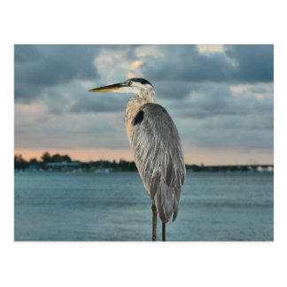 Great Blue Heron with Cortez in Backround Postcard