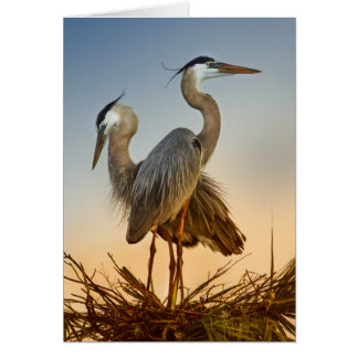 Great Blue Herons at Sunrise Card