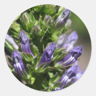 Great Blue Lobelia (Lobelia siphilitica) Classic Round Sticker