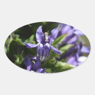Great Blue Lobelia (Lobelia siphilitica) Oval Sticker