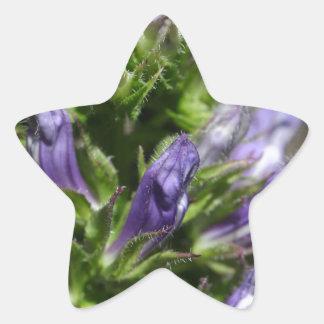 Great Blue Lobelia (Lobelia siphilitica) Star Sticker