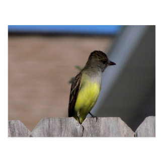 Great Crested Flycatcher Postcard