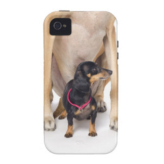 Great Dane and Dachshund portrait Vibe iPhone 4 Cases