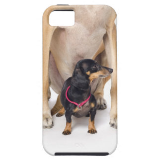 Great Dane and Dachshund portrait iPhone 5 Covers