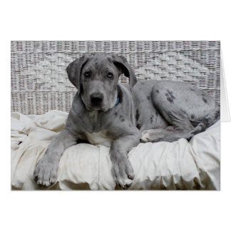 "Great Dane Baby Boy ""Hero"" Card"