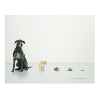 Great Dane, cat, guinea pig, tortoise and slug Postcard