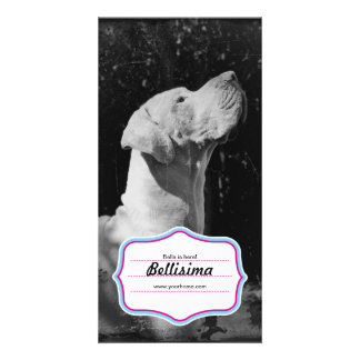 Great Dane Foto Cards Personalised Photo Card