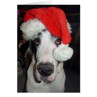 Great Dane 'Gunner' as Santa Greeting Card