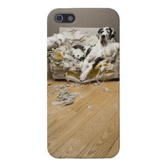 Great Dane on Chewed Sofa iphone 5 case