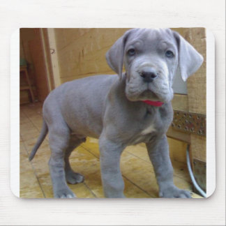 great dane puppy blue mouse pad