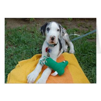 Great Dane puppy Card