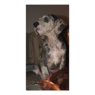 Great Dane Puppy Cards Customised Photo Card