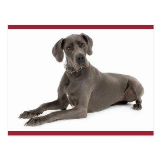 Great Dane Puppy Dog Blank Post Card