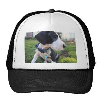 Great Dane Puppy Mesh Hats