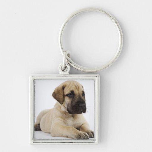 Great Dane puppy Lying in Studio Key Chain