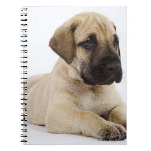 Great Dane puppy Lying in Studio Journals
