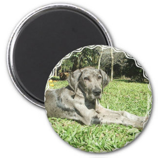 Great Dane Puppy Magnet Fridge Magnet