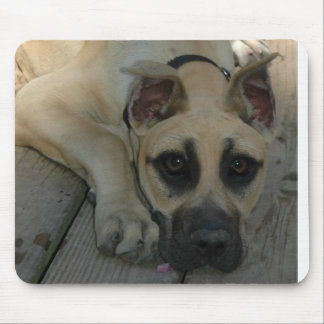 Great Dane Puppy Mouse Pad