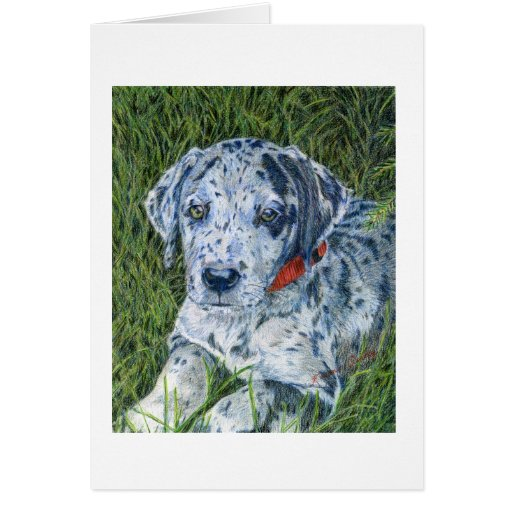 Great Dane Puppy Notecard Greeting Cards