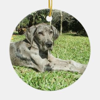 Great Dane Puppy Ornaments