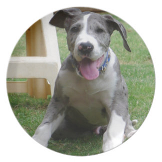 Great Dane Puppy Plate