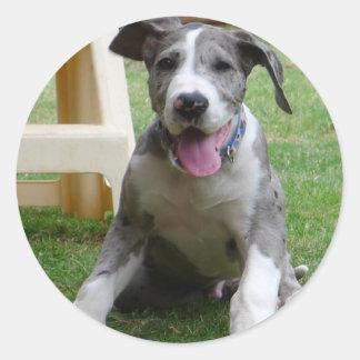 Great Dane Puppy Round Sticker