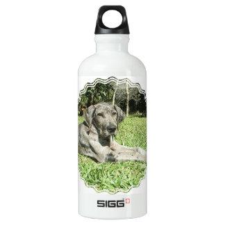 Great Dane Puppy SIGG Traveller 0.6L Water Bottle