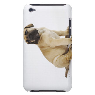Great Dane Puppy Sitting in Studio iPod Touch Cases