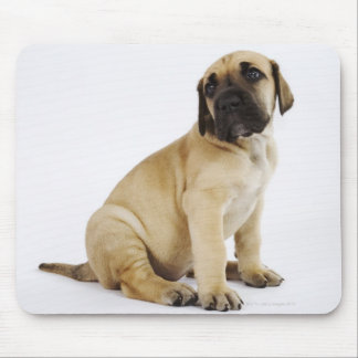 Great Dane Puppy Sitting in Studio Mouse Pad