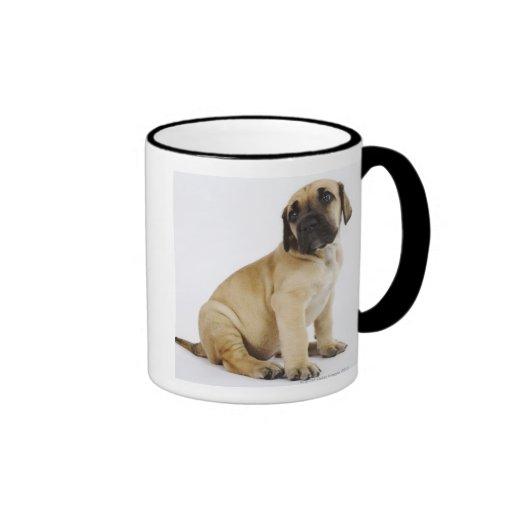 Great Dane Puppy Sitting in Studio Coffee Mugs