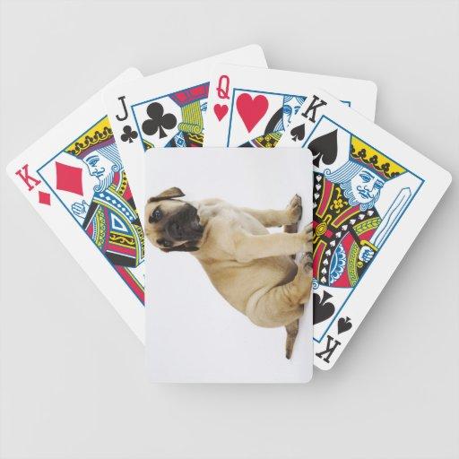 Great Dane Puppy Sitting in Studio Bicycle Card Decks