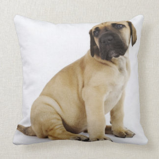 Great Dane Puppy Sitting in Studio Throw Pillow