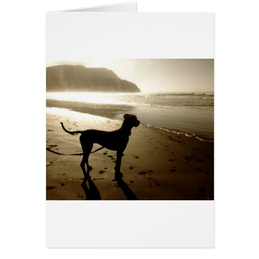 Great Dane Puppy Sunset Cards