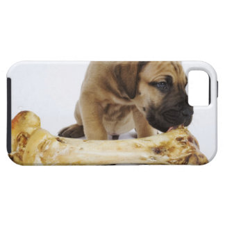 Great Dane puppy with bone in studio iPhone 5 Covers