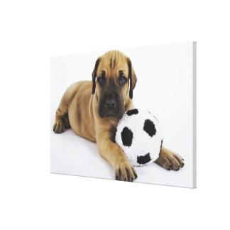 Great Dane puppy with toy soccer ball Gallery Wrap Canvas