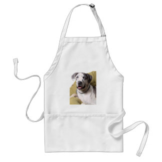 Great Dane with black and white spots Aprons