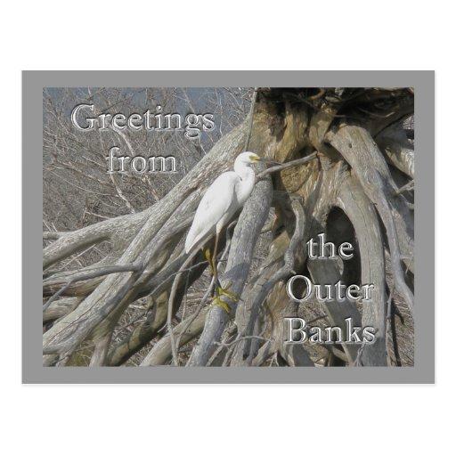 Great Egret (Ardea alba) OBX Outer Banks Postcards