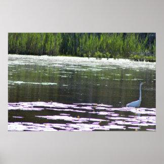 Great Egret Bird Photo Poster