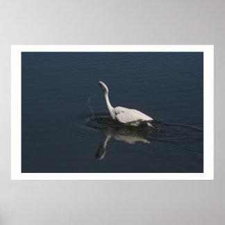 Great Egret Fishing Print
