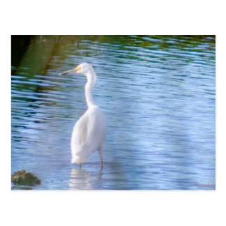 Great egret in wetlands postcard