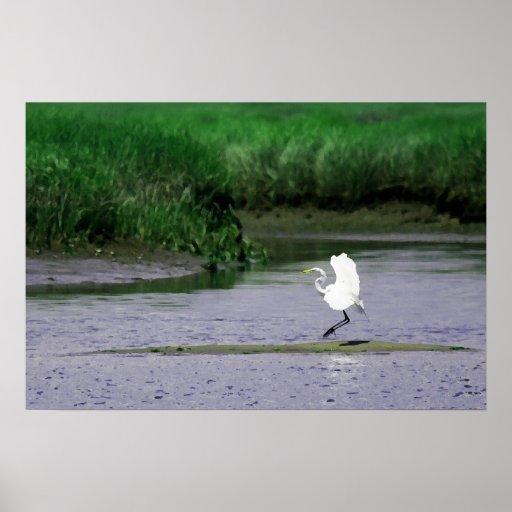 Great Egret landing in a salt marsh - canvas print