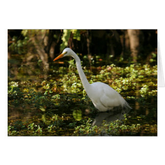 Great Egret Wading in Everglades Card