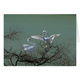 Great Egrets Card