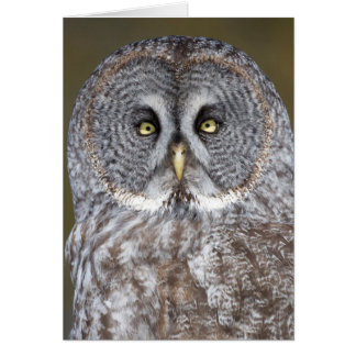 Great gray owl close-up, Canada Card