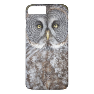 Great gray owl close-up, Canada iPhone 8 Plus/7 Plus Case
