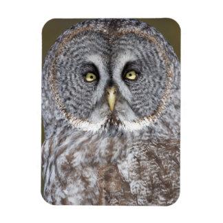 Great gray owl close-up, Canada Rectangular Photo Magnet