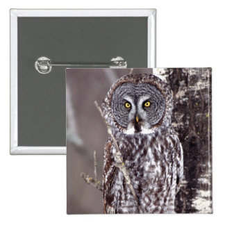 Great Gray Owl on an Aspen tree 15 Cm Square Badge