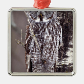 Great Gray Owl on an Aspen tree Silver-Colored Square Decoration