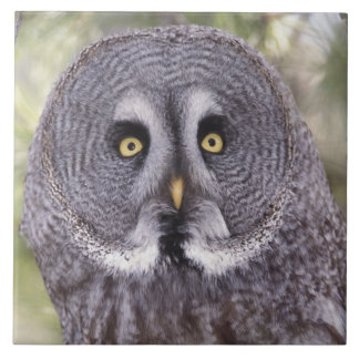 Great Gray Owl (Strix nebulosa) Ceramic Tile